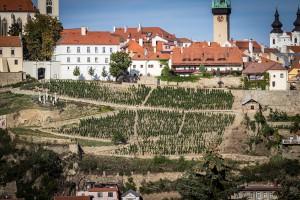 Rajská-vinice